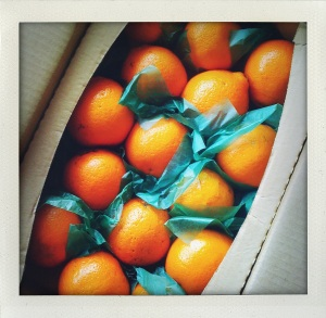 """honeybell oranges"""