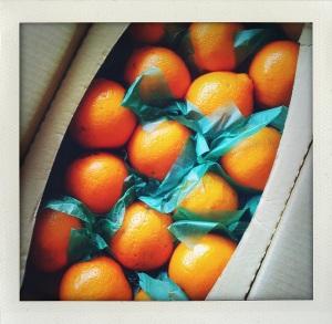 """honeybell oranges"""