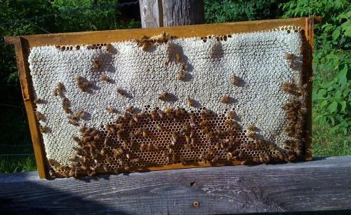 """""""Frame of Honey"""""""