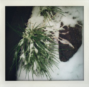 """chives in snow on april 23"""