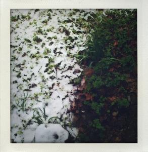 """""""geraniums half under snow"""""""