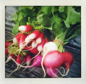 """French and Easter egg radish"""