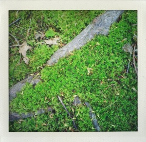 """""""Moss"""""""