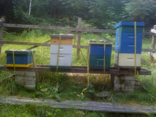"""Beehives strapped down"""
