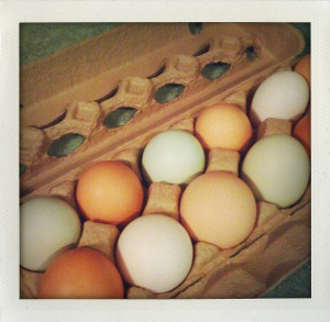 """farmer's market eggs"""