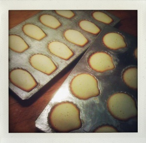 """""""baked madeleines"""""""
