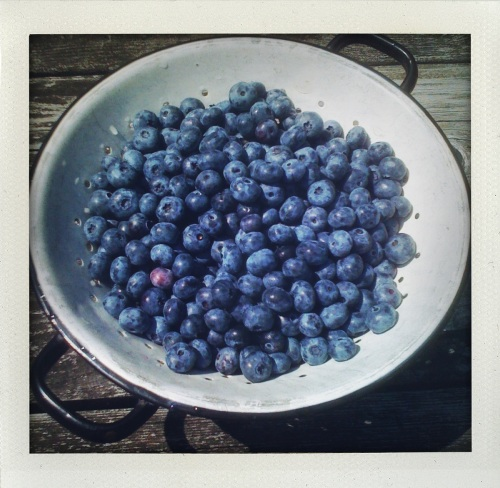 """Blueberries"""