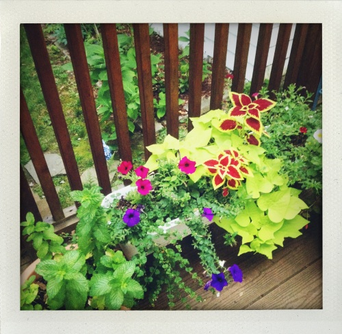 """""""Laura B's garden"""""""