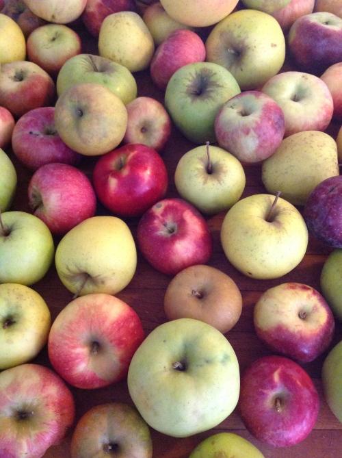 """""""many apples"""""""