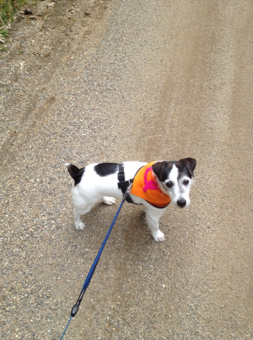 A short walk with the cape of shame