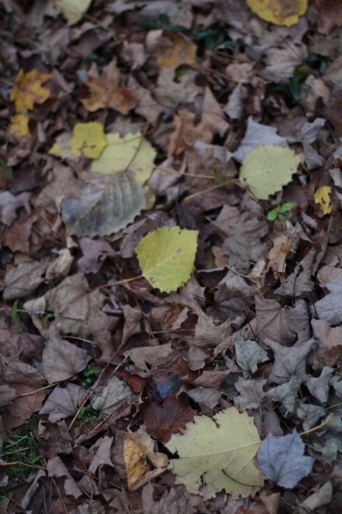 Brown and yellow leaves
