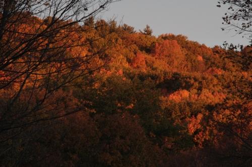 Golden orange fall colors