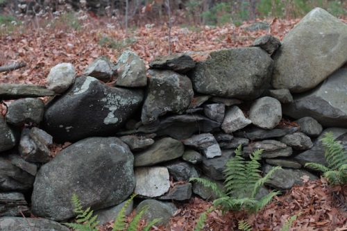 Stone wall in New England