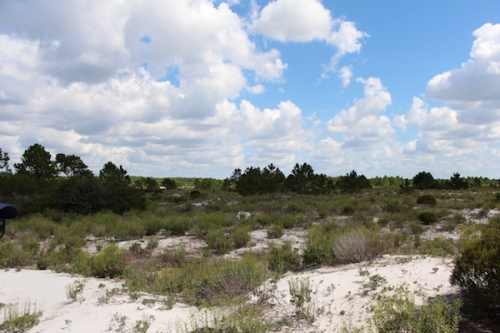 Dunes at Tyndall AFB